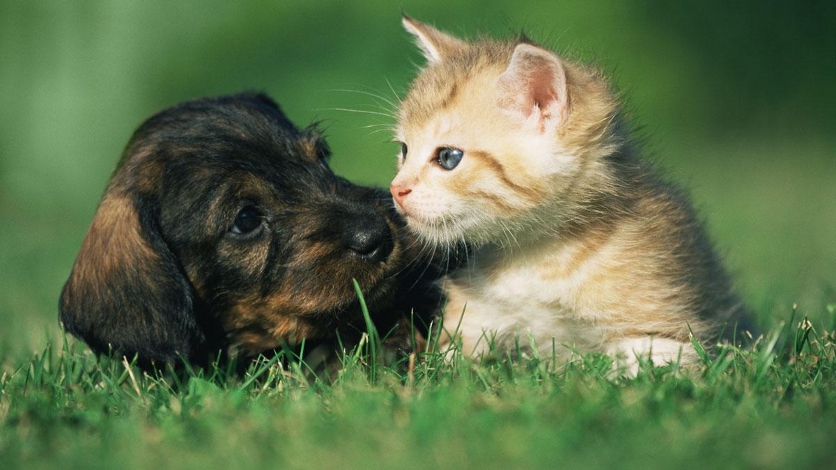 Puppy-Kitten-GettyImages-71919616_20180725142502-159532