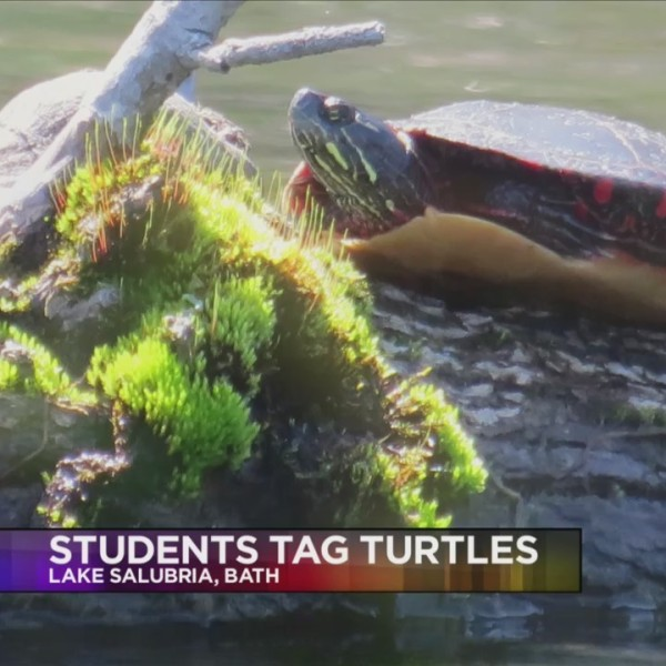 Local_students_collect_and_tag_turtles_0_20180919222808