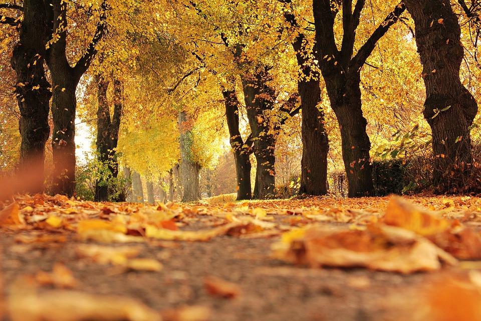 Fall trees-1789120_960_720_1537367001802-873702560.jpg