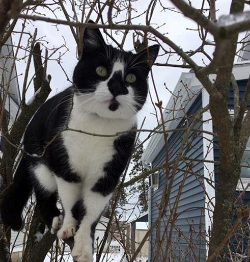 Lucky the Cat 10.2.18_1538510700627.JPG.jpg
