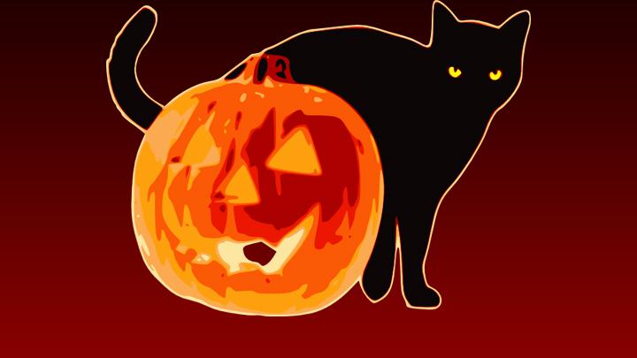 halloween cat with pumpkin 720 public domain