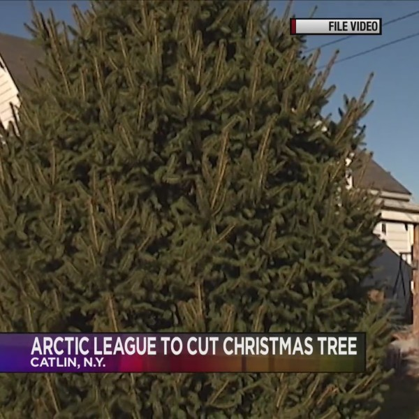 Arctic_League_tree_cutting_2018_preview_0_20181126005404
