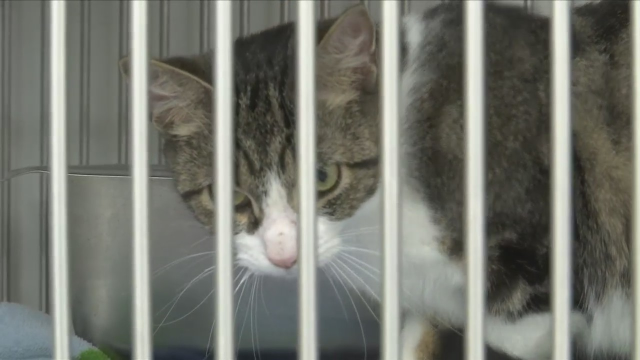 Chemung County SPCA offering subsidized spay/neuter services