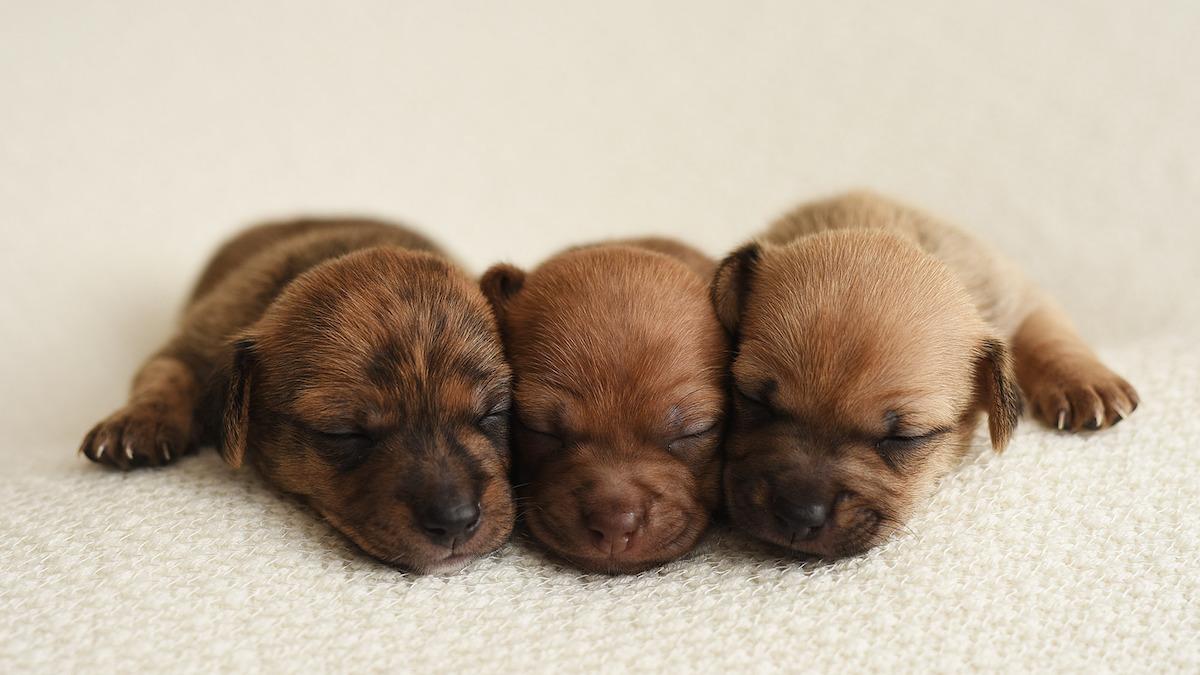 puppies-3_20180608033935-159532