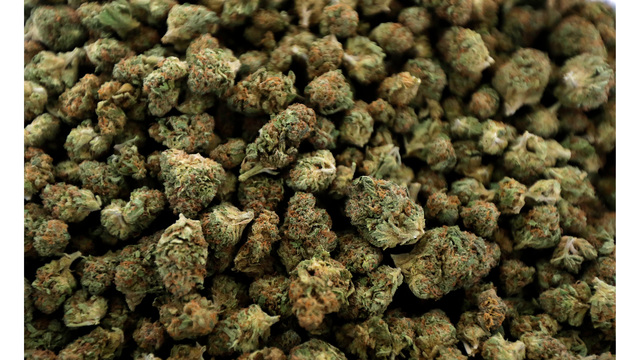 Marijuana Michigan News Guide_1545215354566