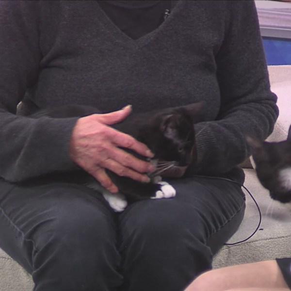 Pet of the Week 12/31/18: Oreo and Tuxedo