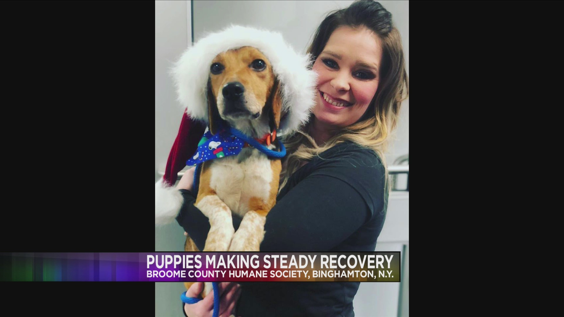 Trooper_the_pup_still_recovering_1_20181217000835