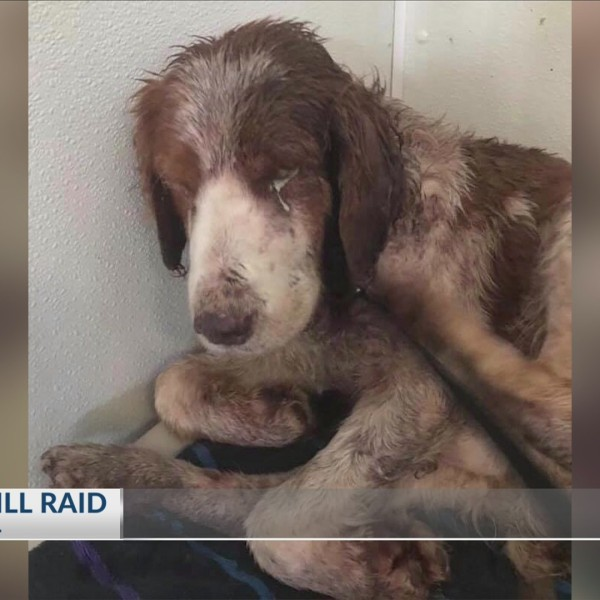 Dogs Seized from Puppy Mill