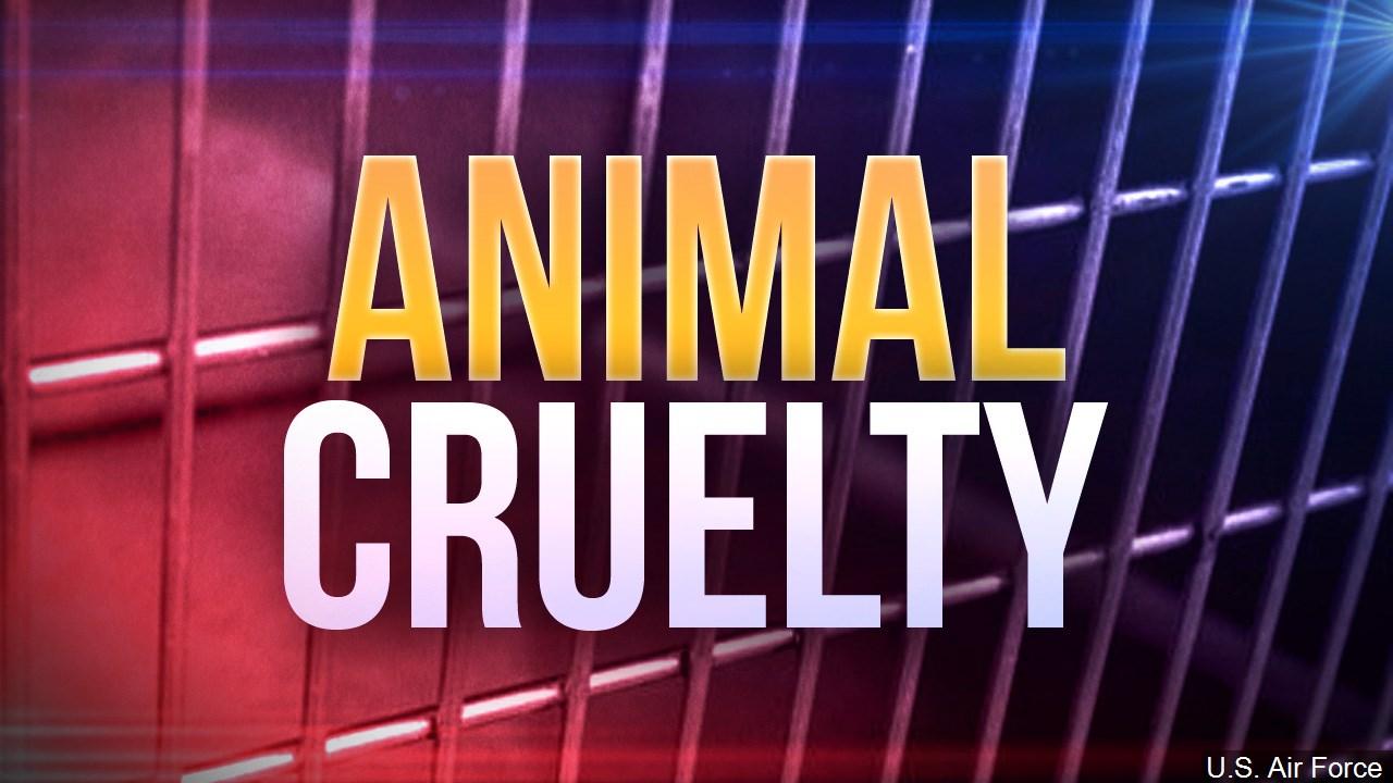 animal cruelty.jpg