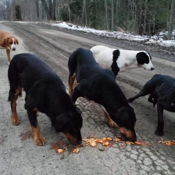 abused dogs (1)_1550516703256.jpg.jpg