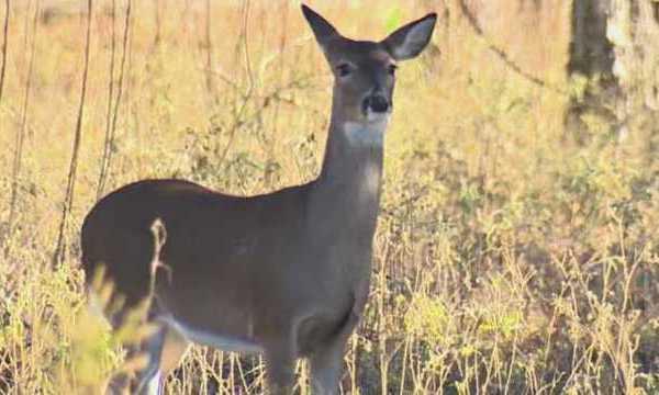 deer-generic_37915979_ver1.0_640_360_1550113562310_72845627_ver1.0_640_360_1550139886278.jpg
