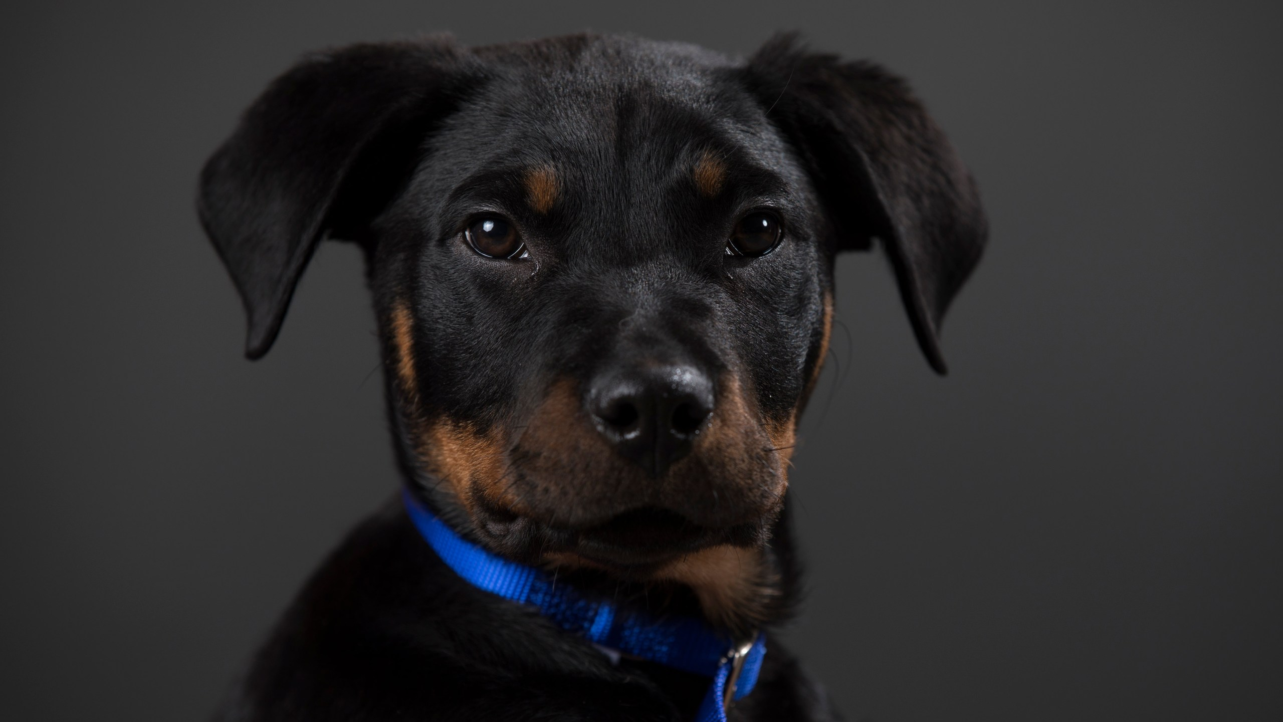 Portraits Of The Battersea Dogs Left Behind This Christmas.jpg