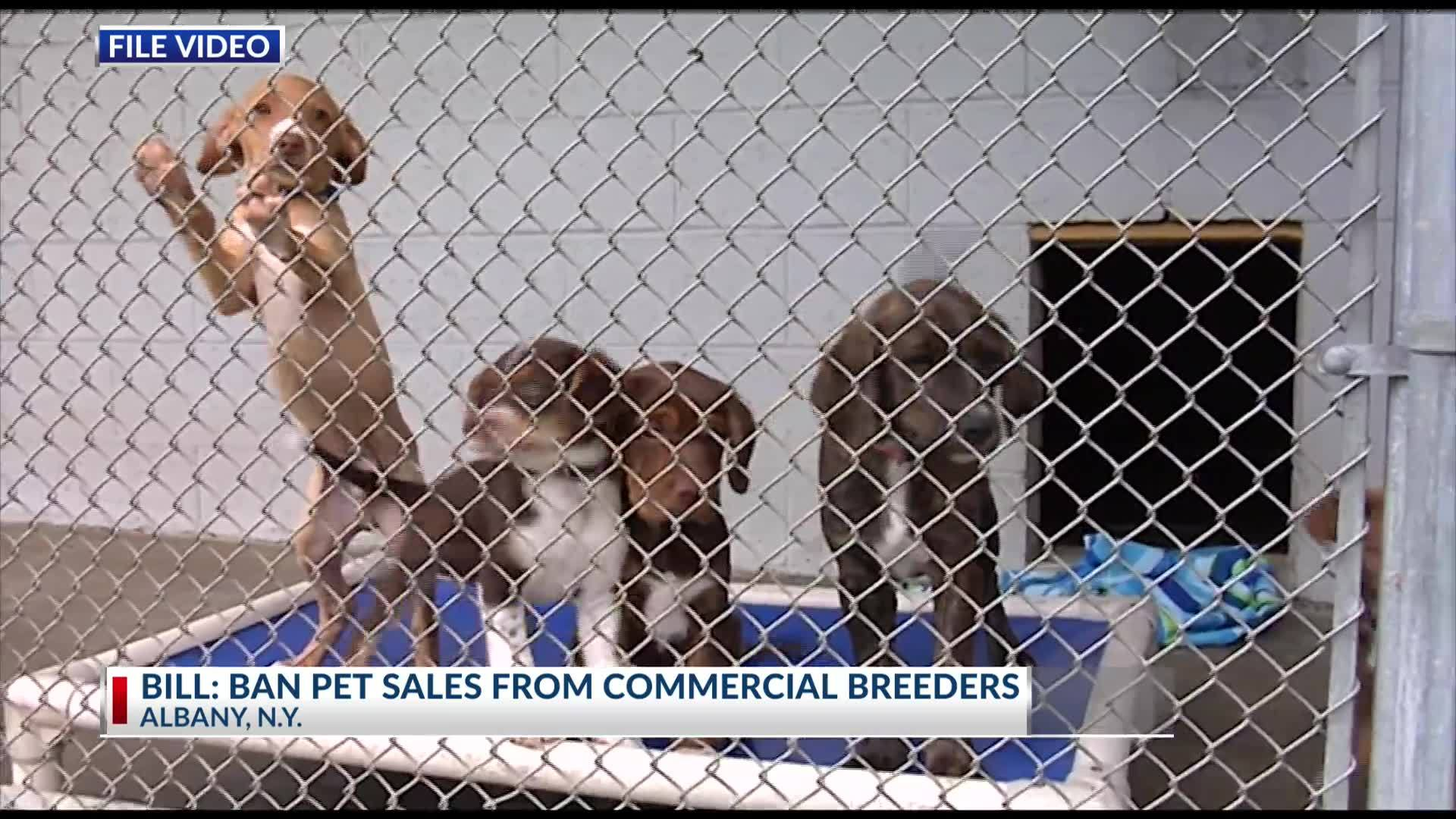 Lawmakers_push_to_ban_sales_of_pets_from_5_20190310050314