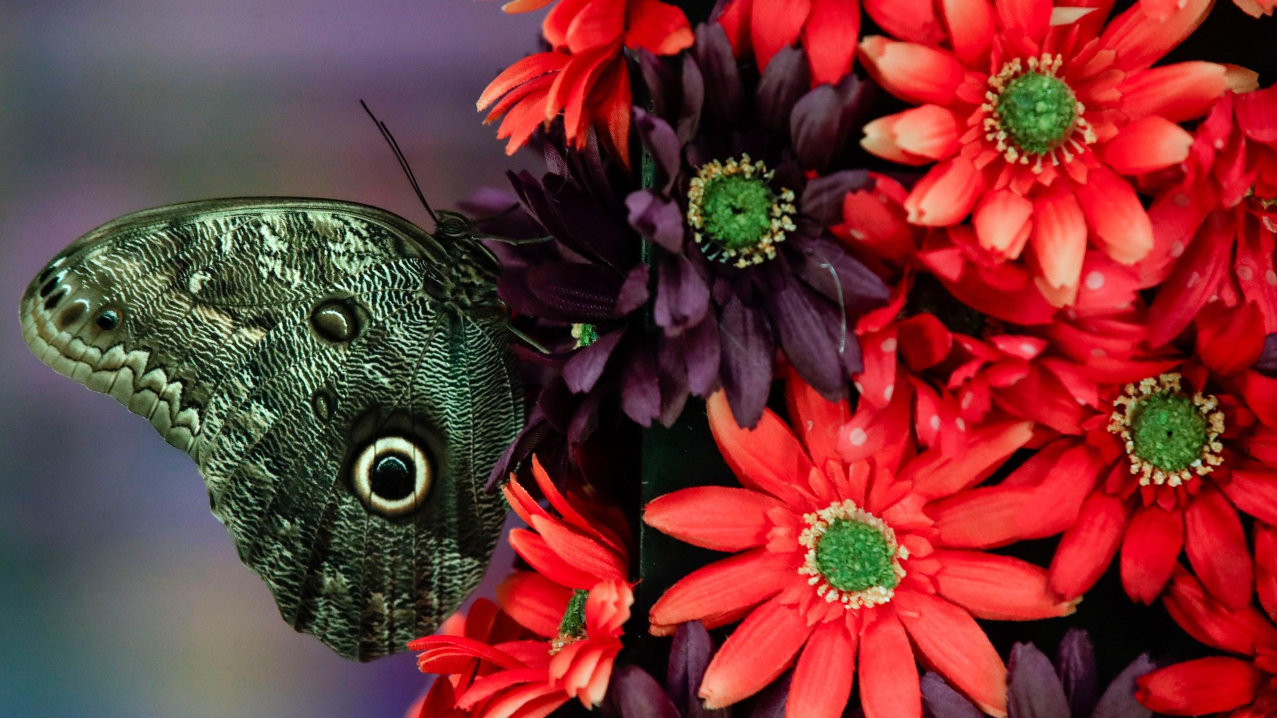 Philadelphia_Flower_Show_79960-159532.jpg06204529