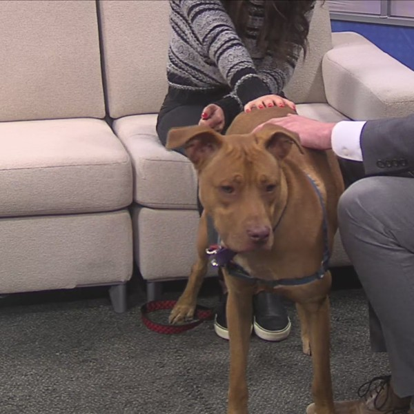 Pet of the Week 4/1/19: Pongo