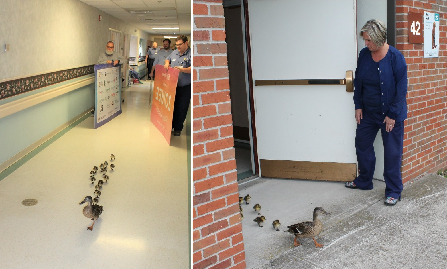 canandaigua ducks_1558454569450.jpg-118809282.jpg