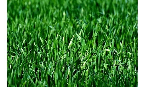 meadow-3375052_960_720_1558123357128_87965318_ver1.0_640_360_1558188005339.jpg