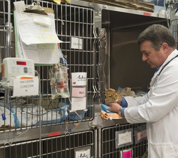 Cat and vet_1559653075452.jpg