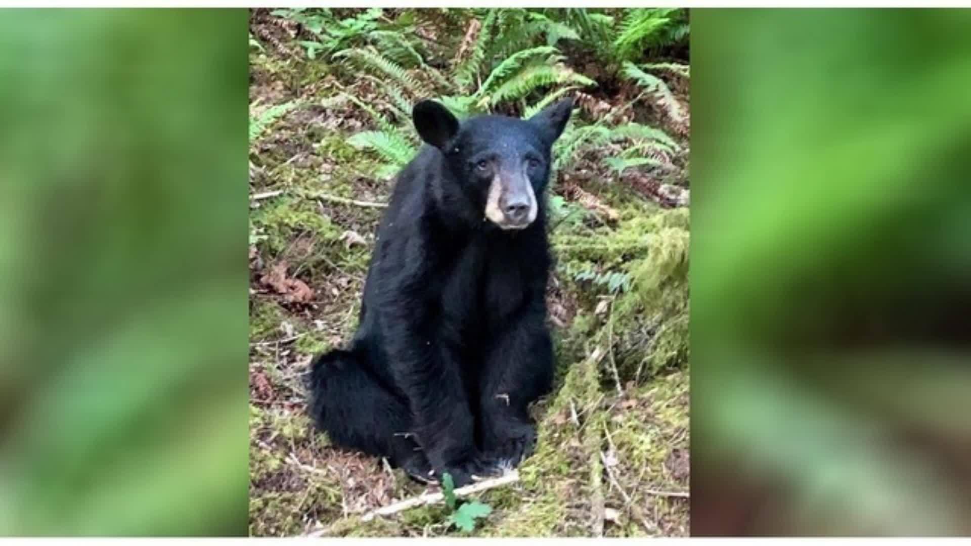 Friendly bear cub killed after people fed it, took selfies