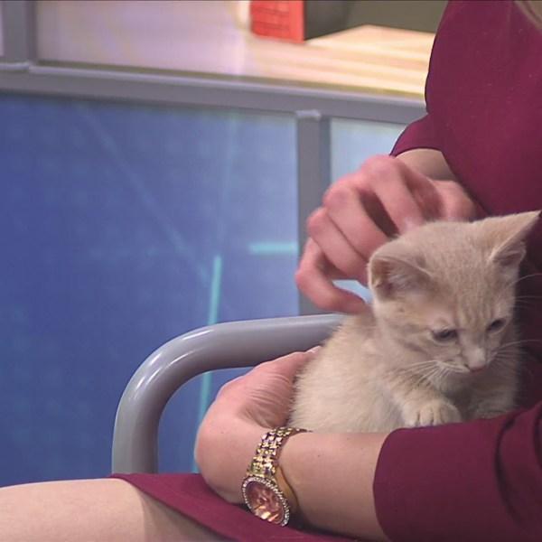 Pet of the Week 6/3/19: Blake