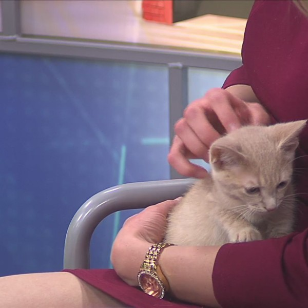Pet of the Week 6/3/19: Blake