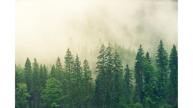 Tree and Woods_1560541923009.jpg.jpg