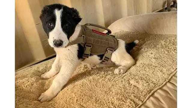 dog_1559849543486.jpg
