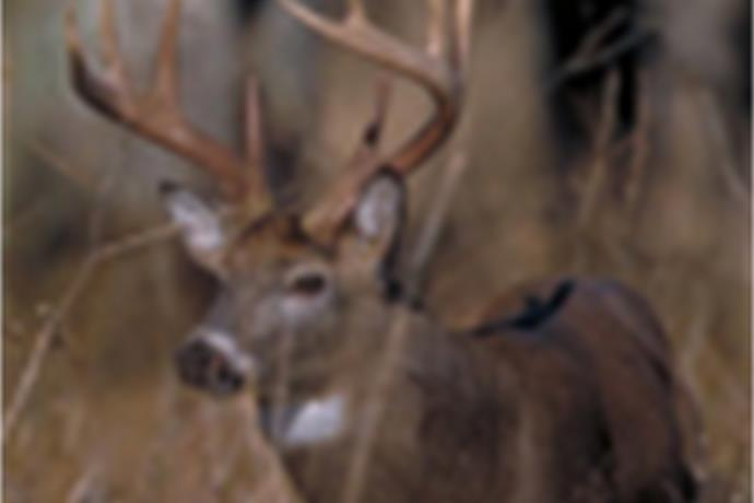 Sunday Hunting In Pennsylvania Quickly Approaching Wetm Mytwintiers Com